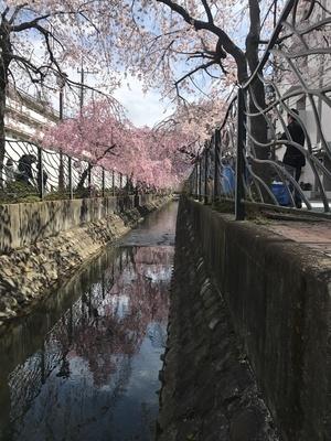4/2 桜 02